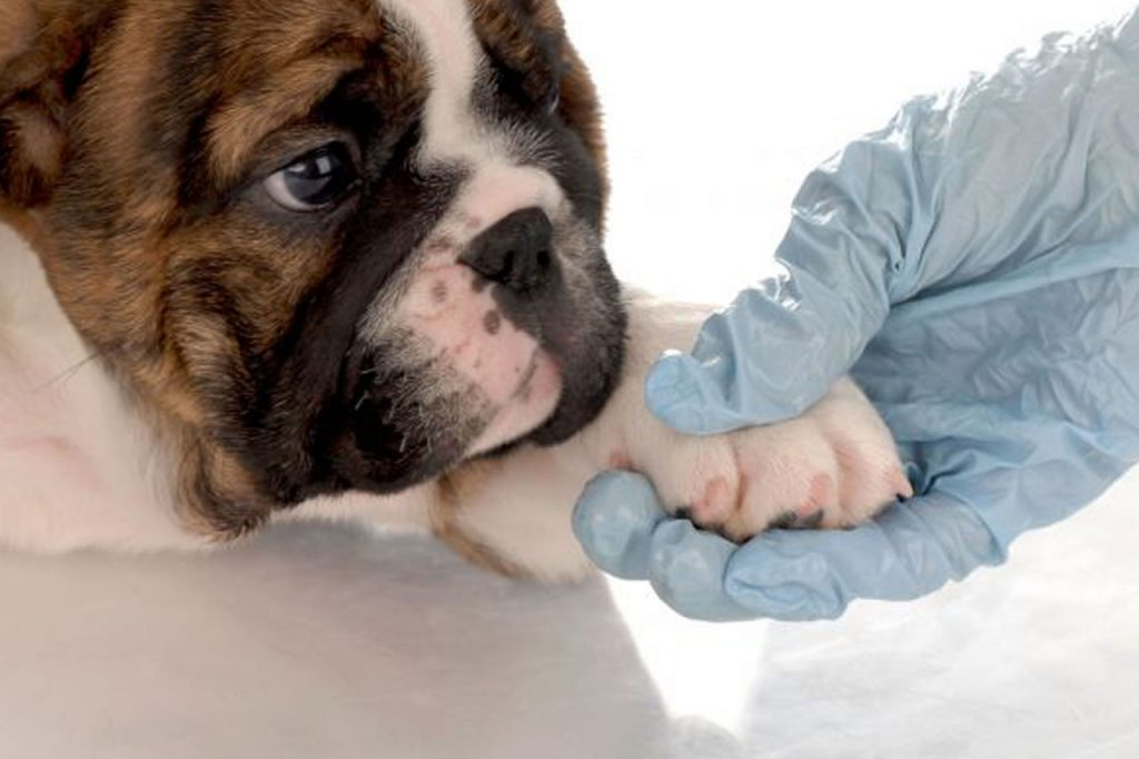 Baños de tratamiento perros - Alojamiento perros barcelona