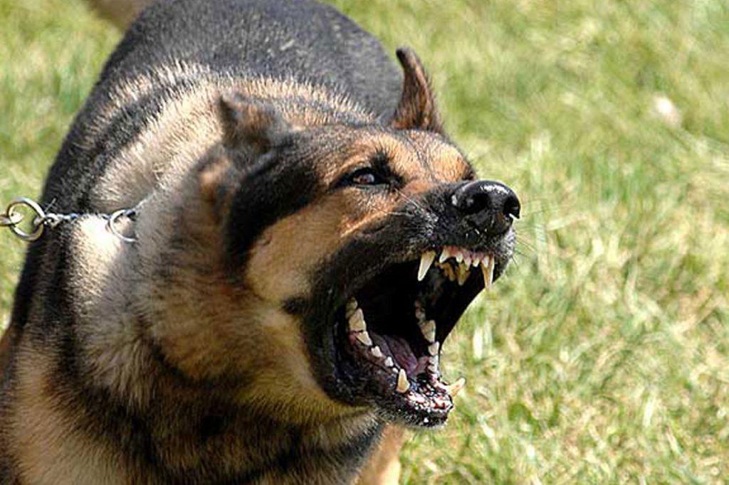 Problemas de conducta perros - Baños de tratamiento perros - Alojamiento perros barcelona