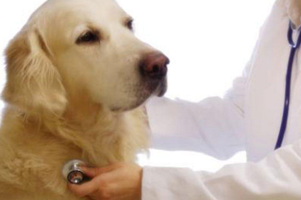 Supervisión Veterinaria 24 h - Hotel para perros y gatos en Barcelona