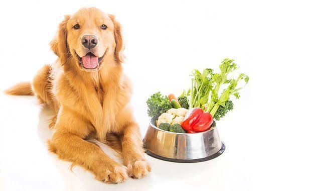 La mejor Alimentación - Residencia Canina Barcelona