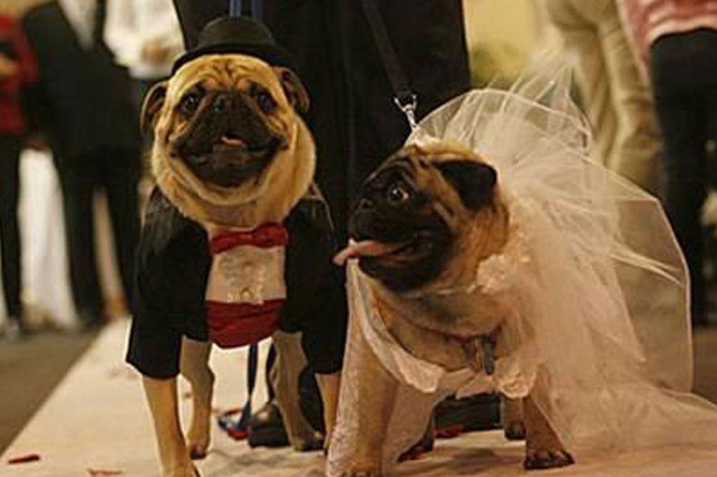 Asesoramiento reproducción perros - Alojamiento perros barcelona
