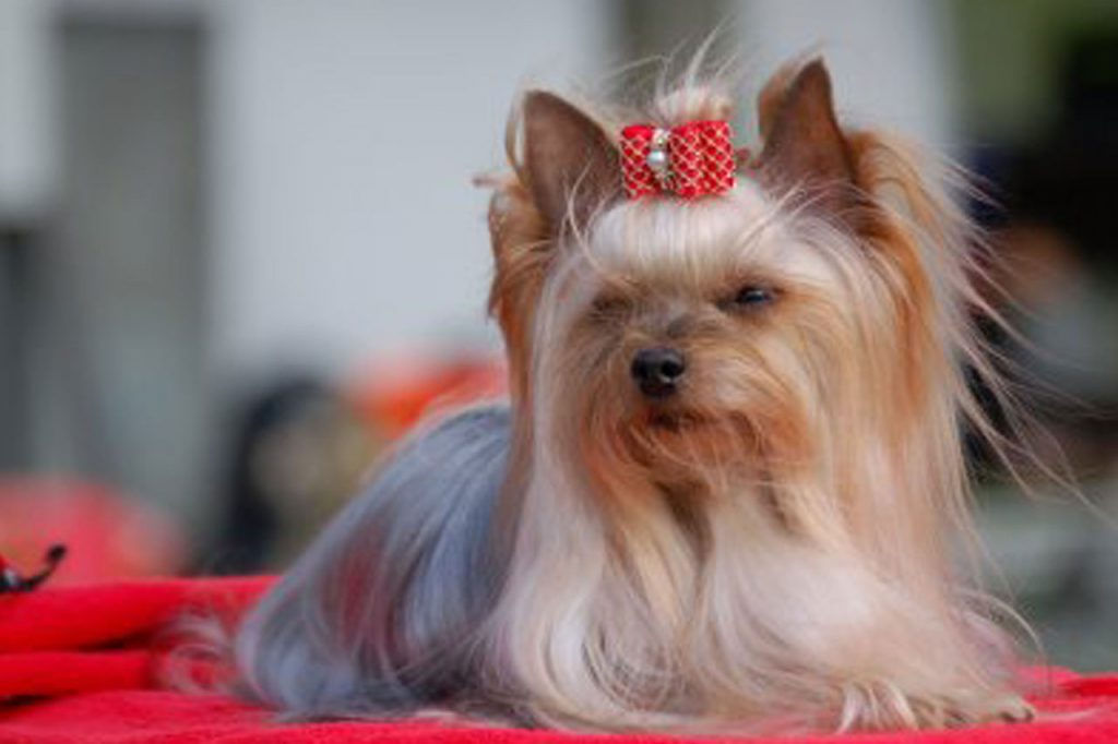 Handling - Residencia Canina en Barcelona