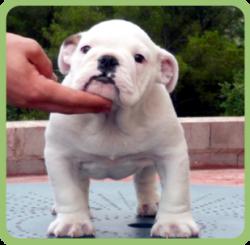 cachorros_residencia_canina
