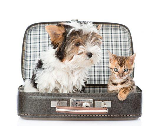 Reserva online residencia canina y felina en Barcelona