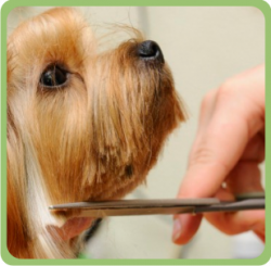 Servicios - Residencia Canina en Barcelona